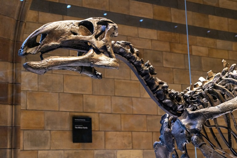 Skeleton of prehistoric dinosaur animal in the Natural History Museum of London.