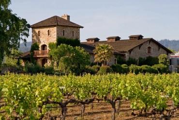 Napa Valley vineyard at sunset. California USA