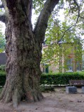 Quaker Gardens, with the Gatehouse in the background