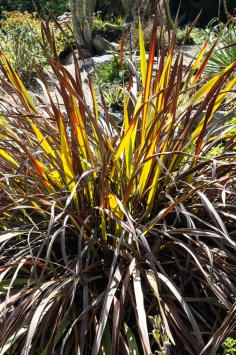 16-9-17-roscoff-exotic-garden-lr-0677