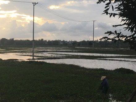 Rice paddies and the conical hat: we learned the hat is waterproof and mainly worn by women. That didn't stop Corey for buying a conical hat in the market this same night.
