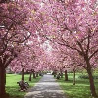 Primavera em Londres 2020