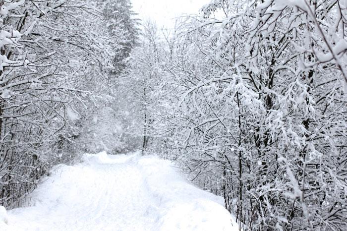winter-wonderland02