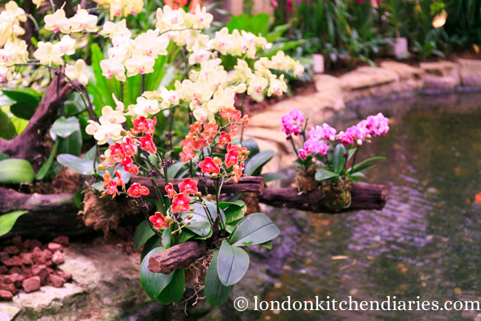 orchid garden at changi singapore airport