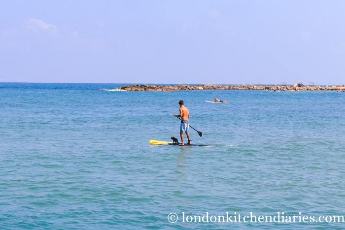 Dog with his owner on a paddle board in Tel Aviv