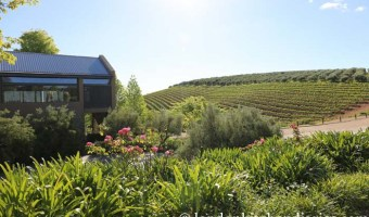 A tour through the Cape Winelands of South Africa