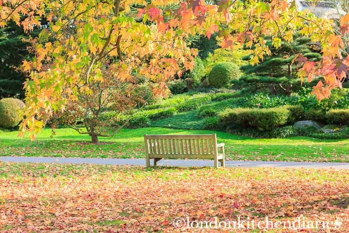 Autumn Colours at Kew Gardens London