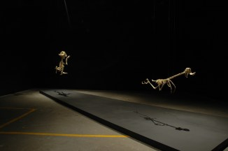 Lee Hyung-koo: Canis Latrans Animatus (2005-2006) and Geococcyx Animatus (2005-2006)
