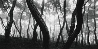 Bae Bien-u: snm1a-047h from 'Sonamu' [Pine Trees], 2000