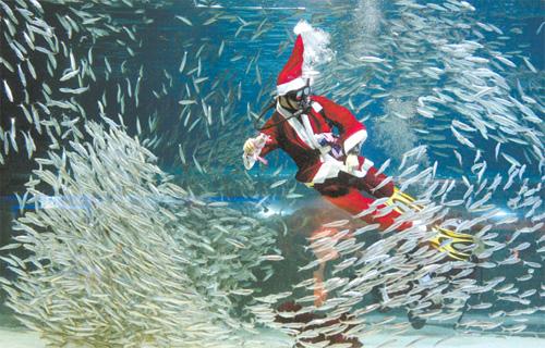 Sardine Santa