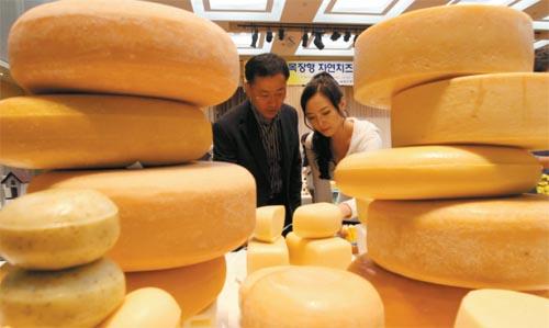 Korean Cheese Contest