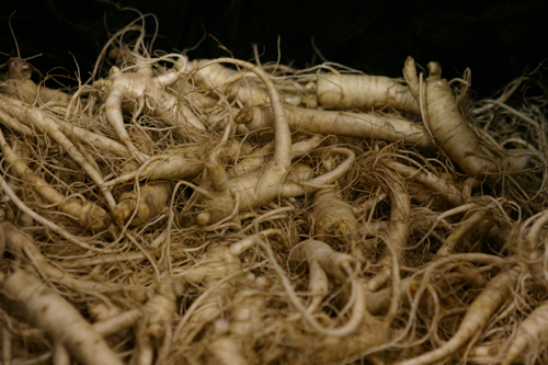 Lots of Ginseng