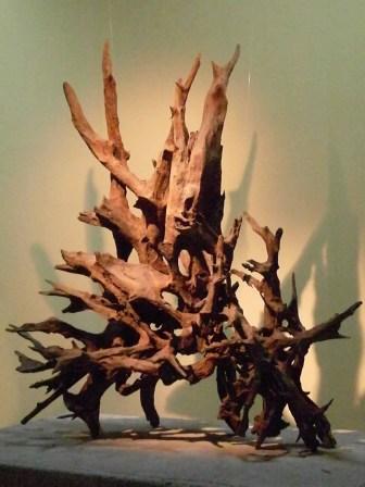 Fossilised tree roots in Jeju Stone Park