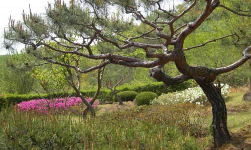 Sena's garden