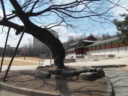 An ancient tree outside the Gyeonghui Palace