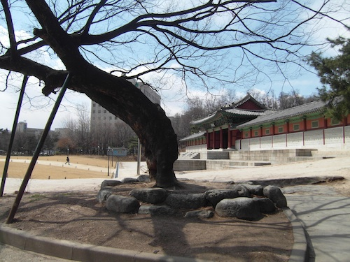 An ancient tree outside the Gyeonghui Palace