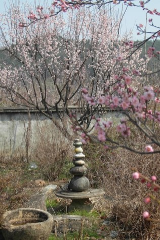 A young cherry tree in Namsa-ri, 29 March 2012