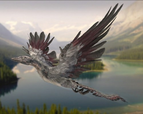 An artist's impression of an archaeopteryx (source: KBS)