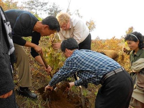 Anbyon planting
