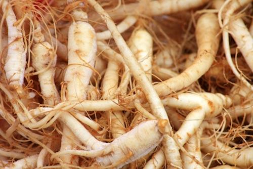 Fresh ginseng roots