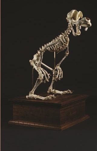 Animatus: Disney cartoon skeleton by Lee Hyung-koo