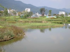 The Wetland zone to the west of the Dongcheon River
