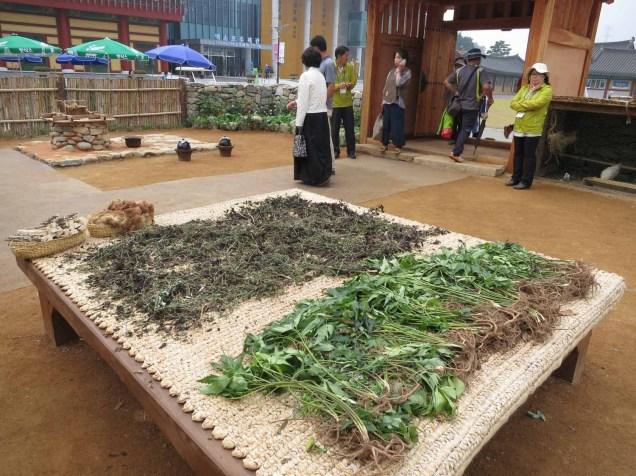 Medicianl herbs in the doctor's garden