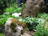 White cyclamen behind a moss-covered rock