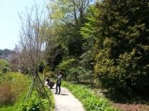 Chollipo Arboretum