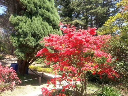 Featured image for post: 2017 travel diary 8: Taean-gun and Chollipo Arboretum