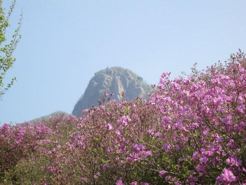 Azaleas and the peak of Hwangmaesan, Sancheong County