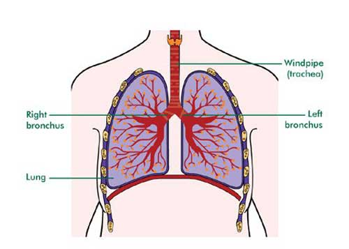Windpipe