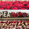 Thumbnail for post: 2019 Travel Diary #2: The Taean Tulip Festival