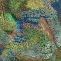 Thumbnail for post: Ilhwa Kim: Seed Unfolding, at HOFA Gallery