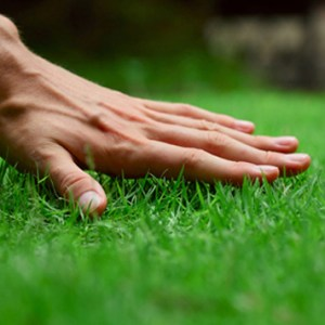 Great Lawns begin with a few key tasks in Spring
