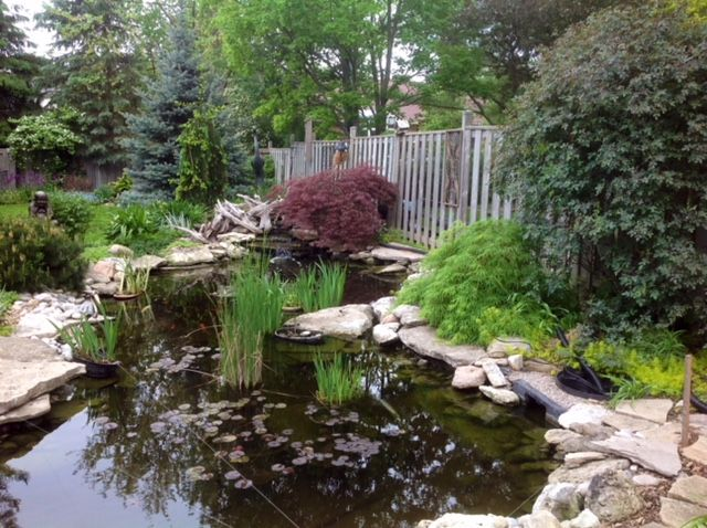 backyard pond image with plants, rocks, trees