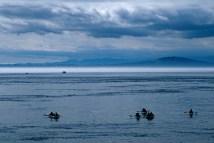 john_probert-whale_watchers