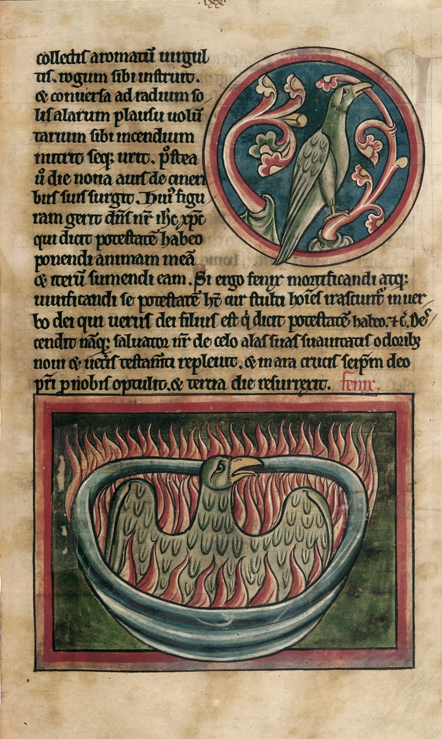 A phoenix rising from the ashes in a 13th-century bestiary (c) British Library