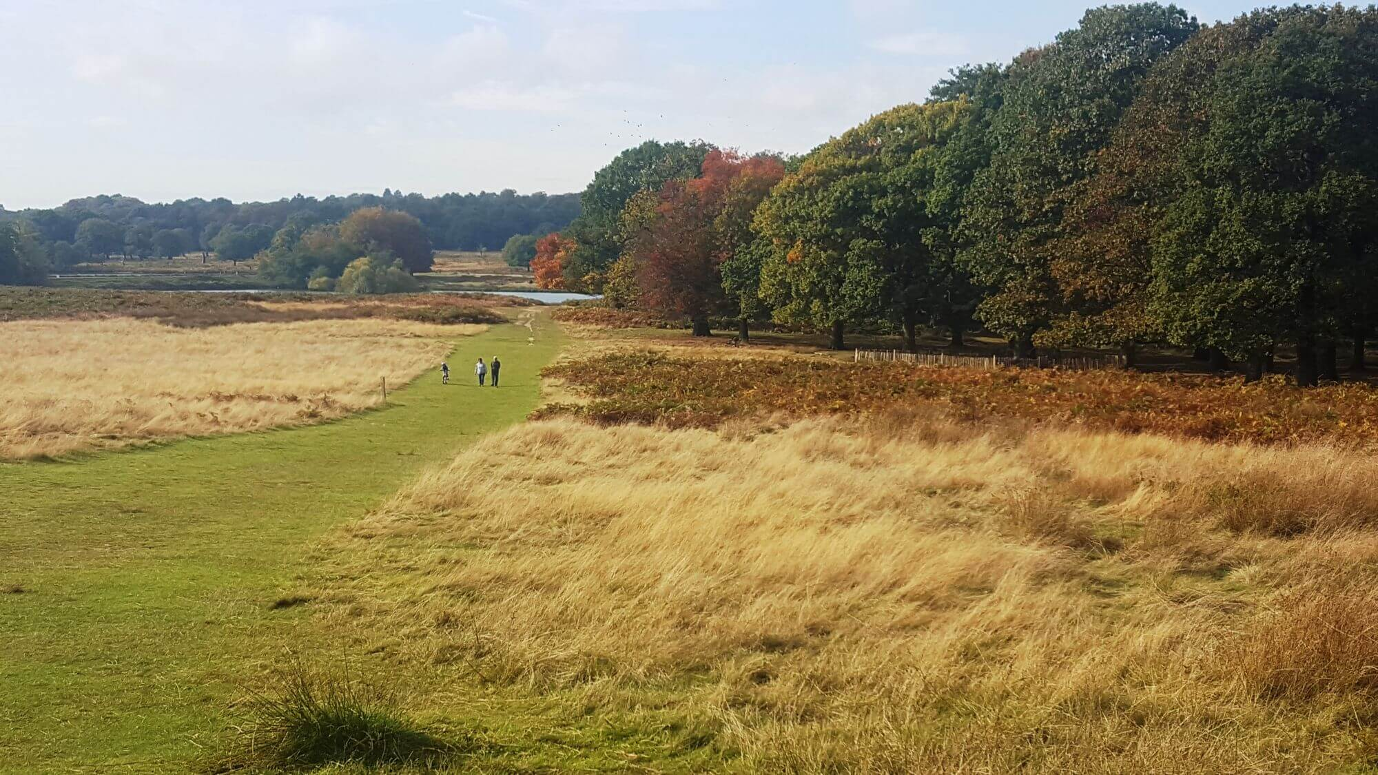 Autumnal day in Richmond Park
