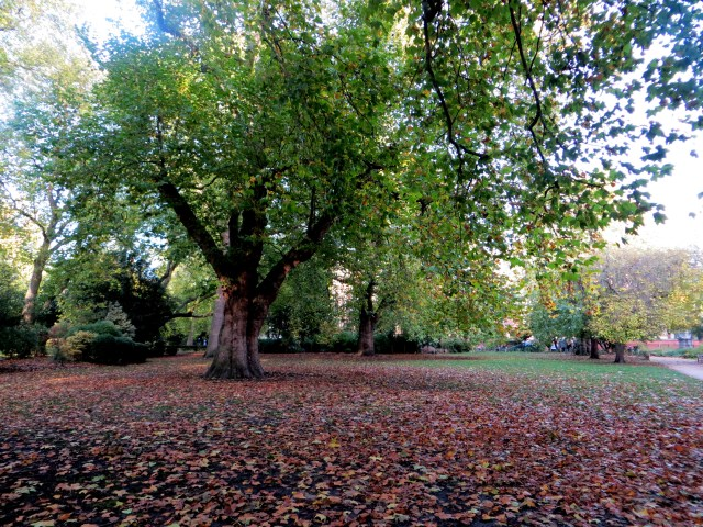 Fallen leaves in the square