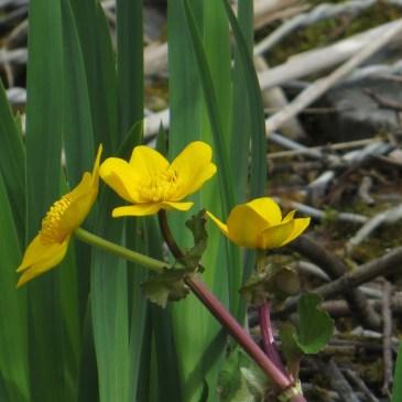 Regent's Canal Walk, no.2, the flora