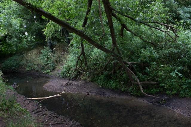 Ravensbourne River in Beckenham Place Park