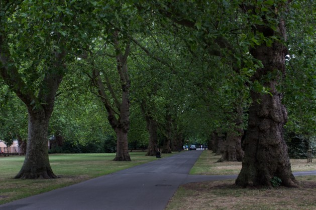 Avenue of Planes in Southwark Park
