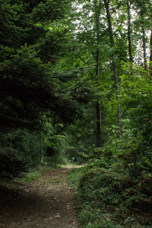 Woodland Walks in Parc Botanique de Haute Bretagne