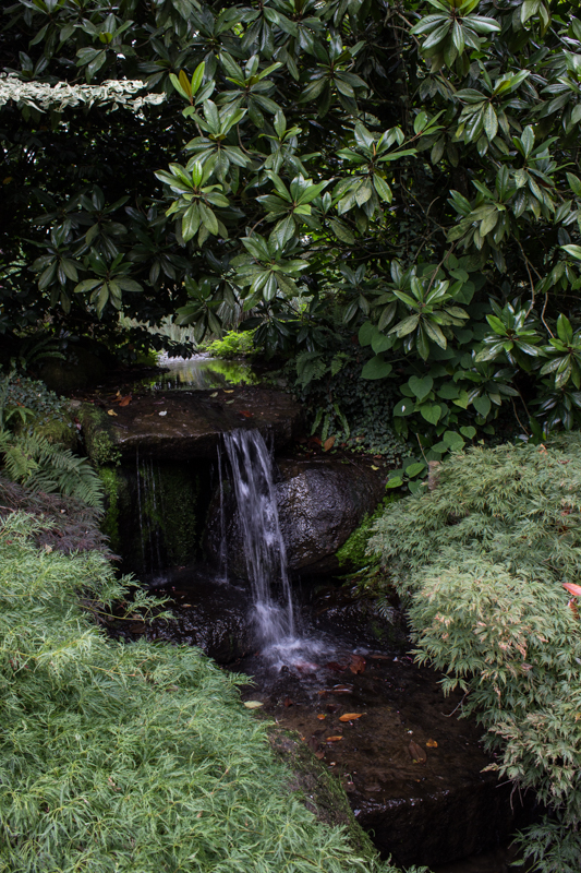 Acers, rhododendrons and water in the Japanese Garden