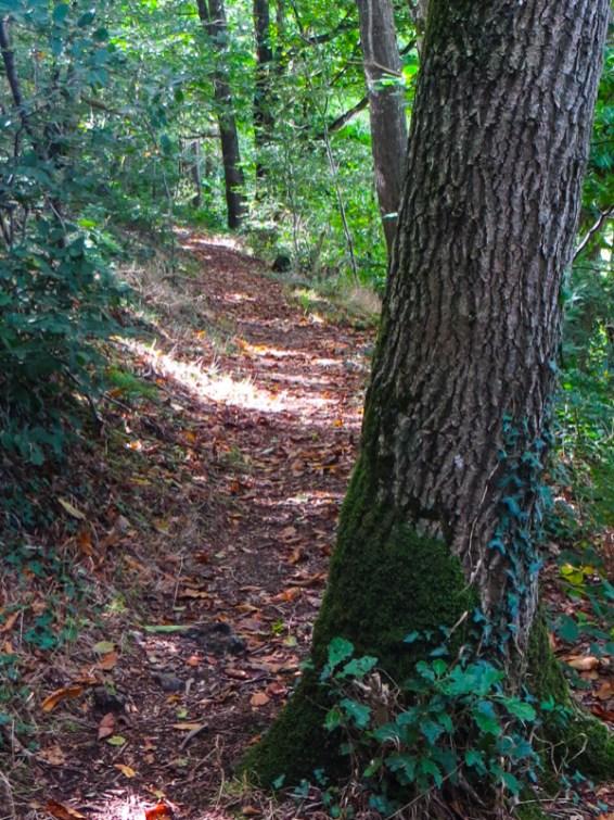 Paths around St Meen