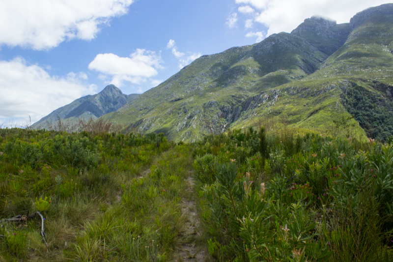 Looking up into the Langeberg Mountains