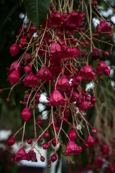 Unknown tree flowers