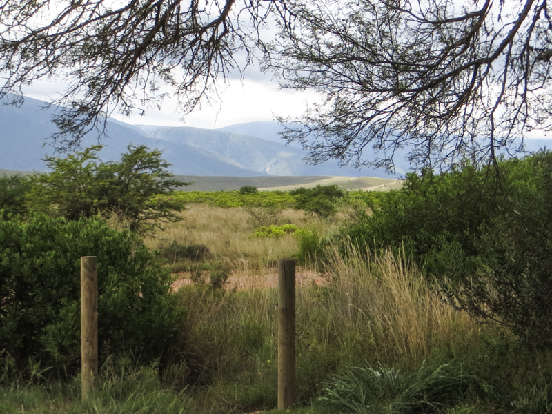 The Bontebok National Park, looking towards the Langeberg Mountains