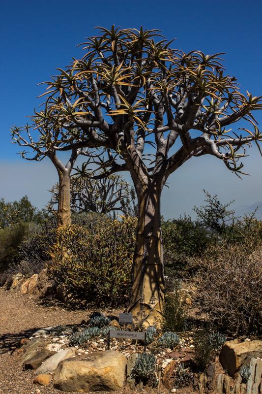 Karoo Desert National Park
